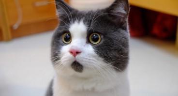 Кот-нарушитель …